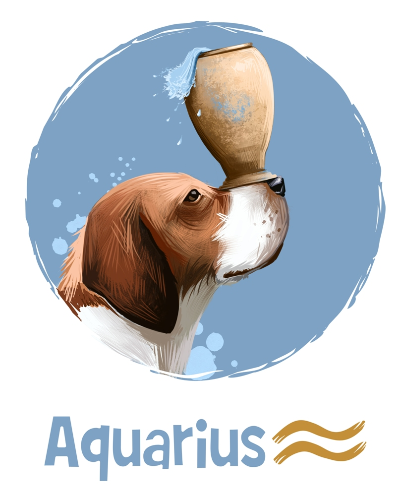 Aquarius in the Year of the Dog 2018
