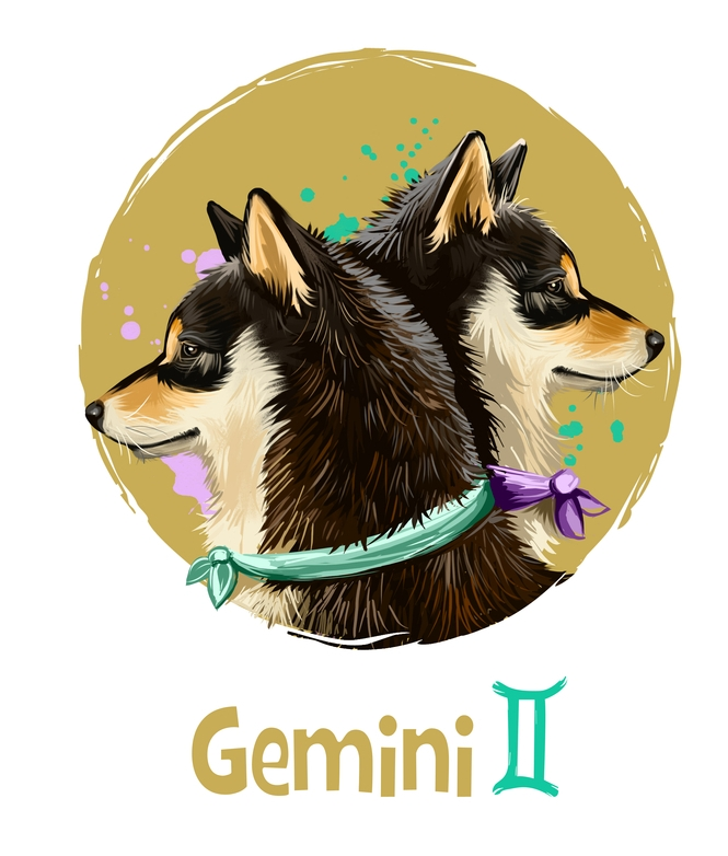 Gemini in the Year of the Dog 2018