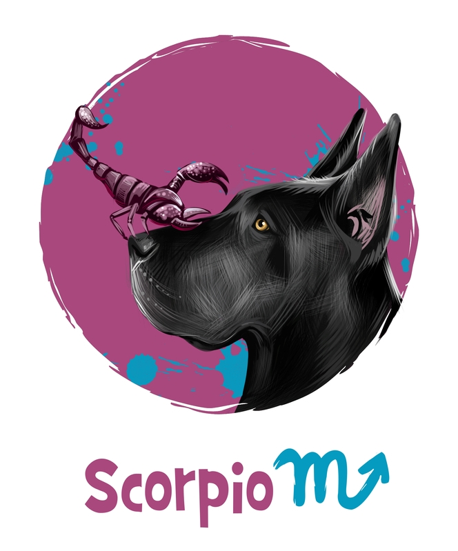 Scorpio in the Year of the Dog 2018