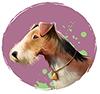 Year of Dog Horoscopes